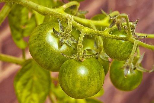Agricultura sostenida por la comuidad